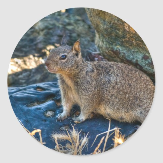Posing Squirrel Classic Round Sticker