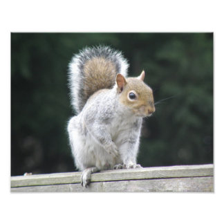 Posing Squirrel Photo Print