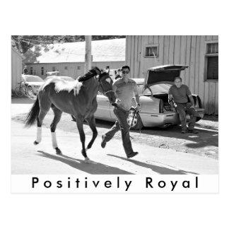Positivamente real en el asilo del caballo postales