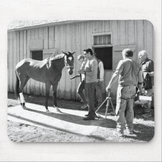 Positivamente real en el asilo del caballo tapete de ratón