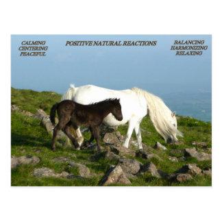 POSITIVE NATURAL REACTIONS POSTCARD