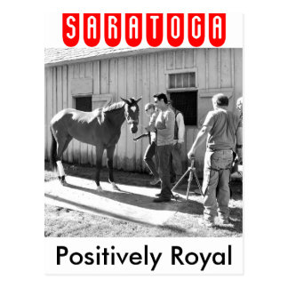 Positively Royal at Horse Haven Postcard