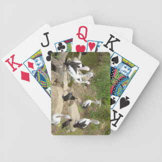 Possible Plotting Pelican Problems Bicycle Playing Cards