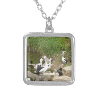 Possible Plotting Pelican Problems Jewelry