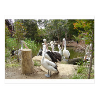 Possible Plotting Pelican Problems Post Card