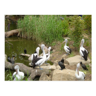 Possible Plotting Pelican Problems Post Cards