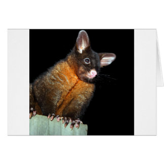Possum at night greeting card