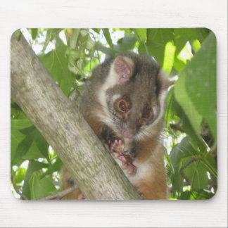 Possum In A Tree Mouse Pad