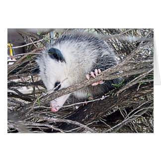Possum Opossum Card