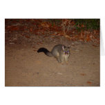 Possum With Red Shinning Eye Greeting Card