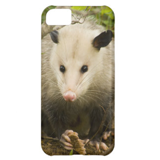 Possums are Pretty - Opossum Didelphimorphia Cover For iPhone 5C