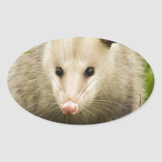 Possums are Pretty - Opossum Didelphimorphia Oval Sticker