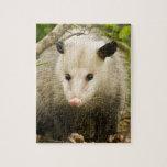 Possums are Pretty - Opossum Didelphimorphia Puzzle