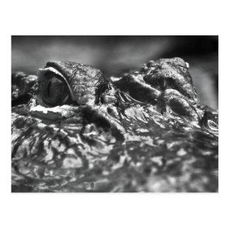 POST CARD Cape Fear Alligator - North Carolina
