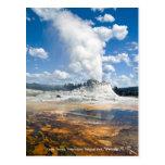 Post Card - Castle Geyser