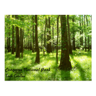 Post Card - Congaree National Park