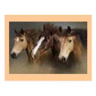 Post card ith Horses