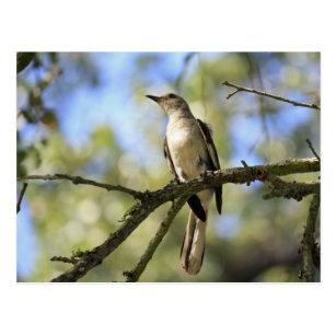 texas state bird postcards zazzle