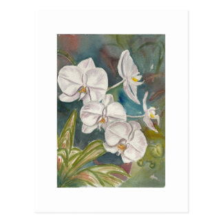 Post Card with an image of Orchids.