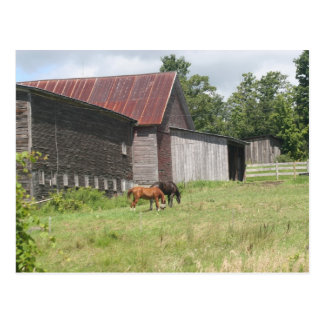 Post Card with two horses and barn