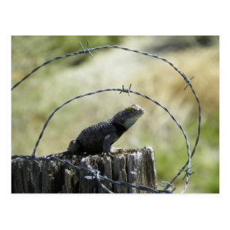 Post lizard postcard
