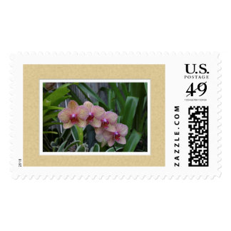 Post-stamp with an image of Orchids. Postage