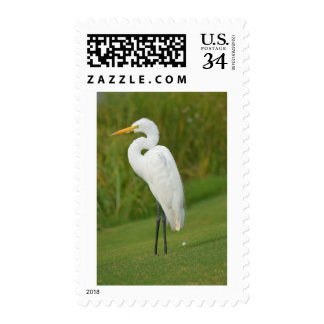 Post-stamp with an image of White Egret. Postage Stamp
