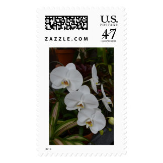 Post-stamp with an image of White Orchids. Postage