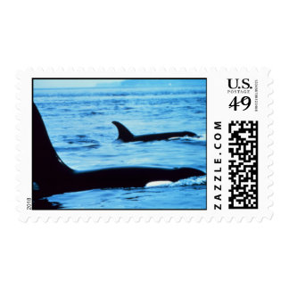 Postage-blow hole whales noaa postage