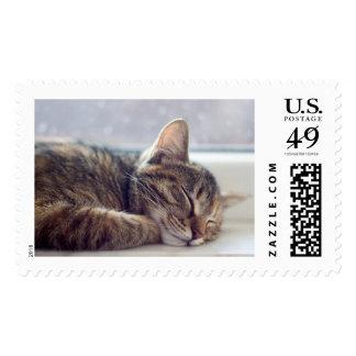 Postage cat