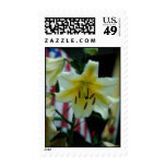 Postage - Flag and Lily