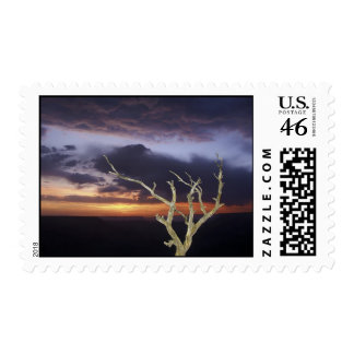 Postage - Grand Canyon Sunset Tree
