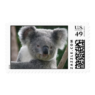 Postage Koala Australia