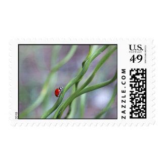Postage, Ladybug Postage Stamps