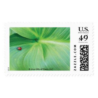 Postage - Ladybug I