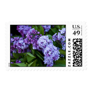 Postage, Lilac Blossoms # 40