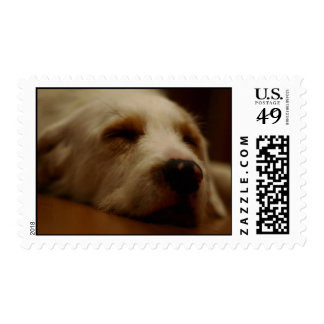 Postage Puppy