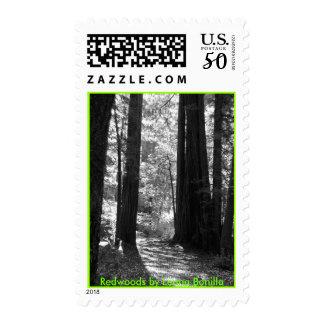 Postage - Redwoods