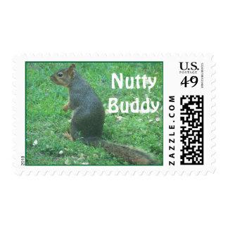 Postage says :  NuttyBuddy