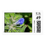 Postage: Small Blue Flower