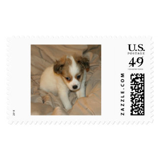 Postage stamp, 49 cents, white chihuahua puppy
