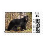 postage stamp - black bear