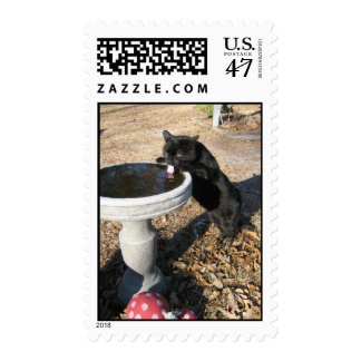postage stamp black cat drinks from birdbath