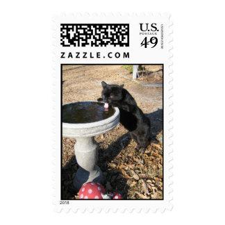 postage stamp black cat drinks from birdbath