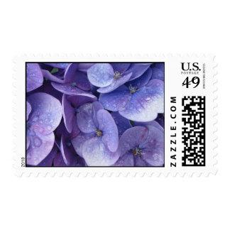 postage stamp - blue hydrangeas