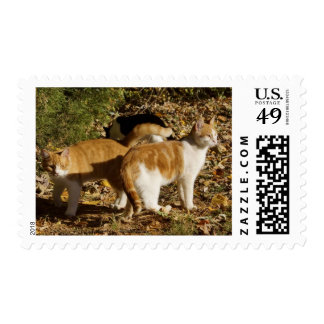 Postage Stamp:  Ember and Carrot