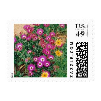 postage stamp floral