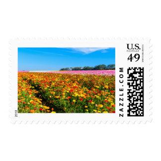 Postage stamp flower fields