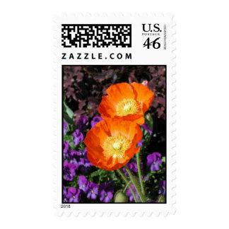 Postage Stamp, Icelandic Poppy