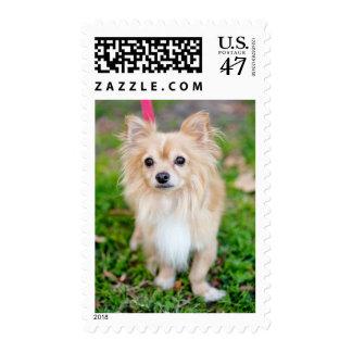 Postage Stamp - Nugget